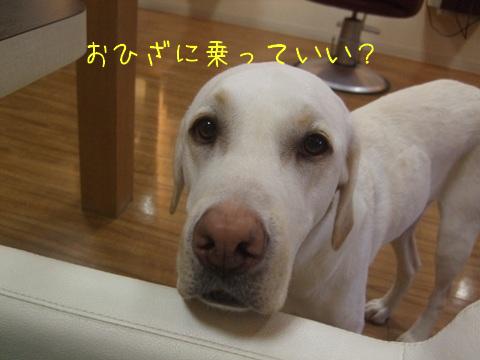 2010_05245gatu0014.jpg