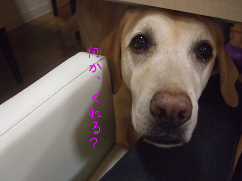 2010_05245gatu0017.jpg