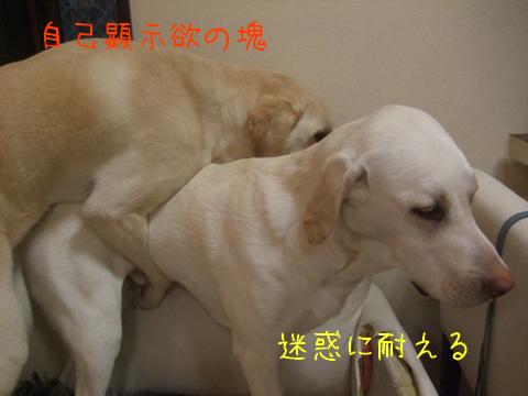 2010_05245gatu0023.jpg