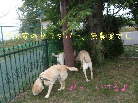 2010_06075gatu0022.jpg