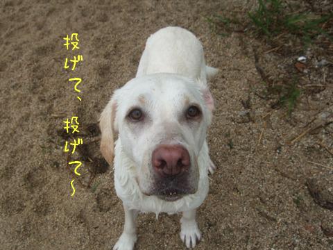 2010_06075gatu0032.jpg