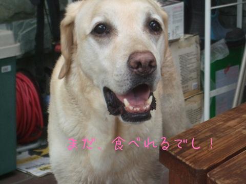 2010_06075gatu0057.jpg