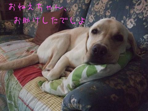 2010_06175gatu0011.jpg