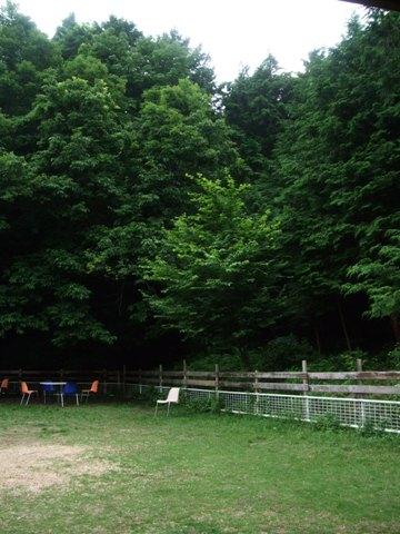 2010_06215gatu0041.jpg