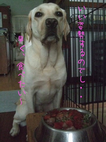 2010_06275gatu0007.jpg