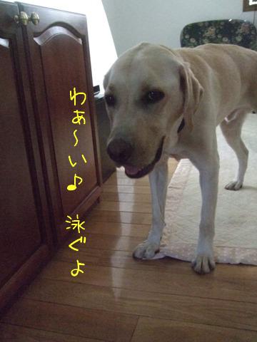 2010_08155gatu0001.jpg