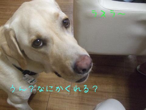 2010_09135gatu0015.jpg