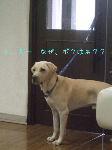 2010_09135gatu0019.jpg