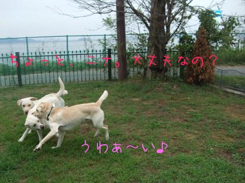 2010_09195gatu0018.jpg