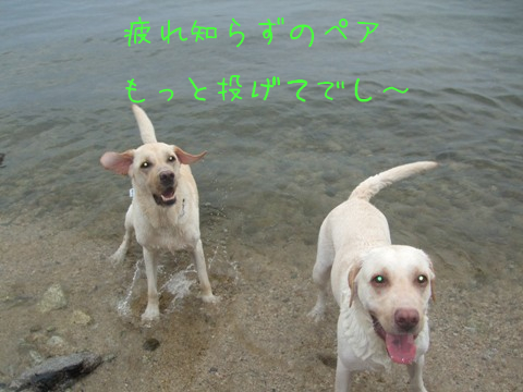 2010_09195gatu0032.jpg