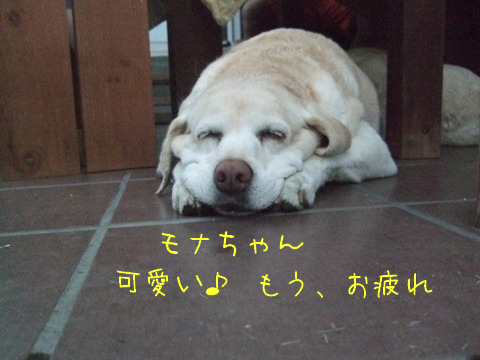 2010_09195gatu0038.jpg