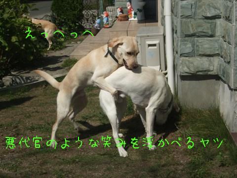 2010_09275gatu0002.jpg