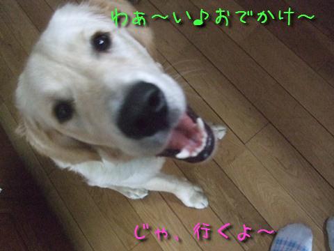 DSCF4002_20110621203623.jpg