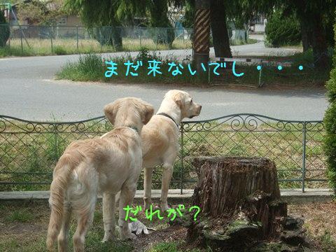 DSCF4004_20110509202243.jpg