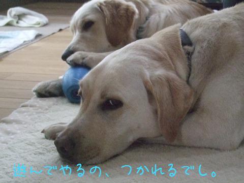DSCF4005_20110523203253.jpg