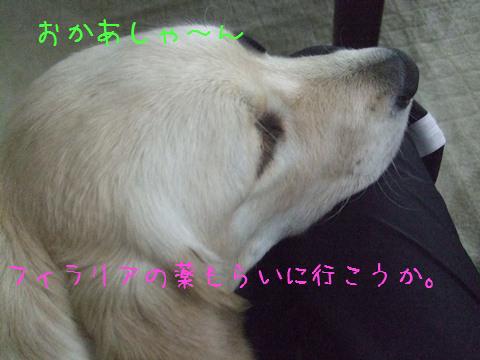 DSCF4006_20110528131414.jpg