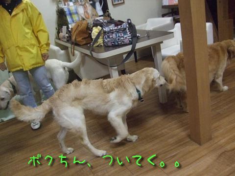 DSCF4007_20110621203934.jpg
