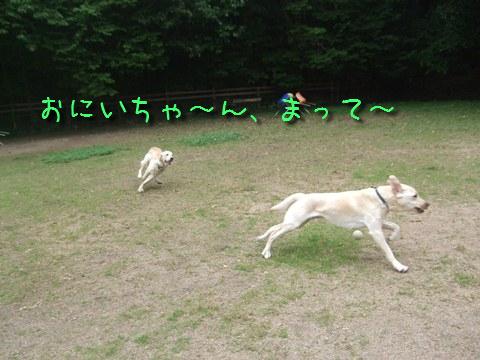 DSCF4010_20110613134034.jpg