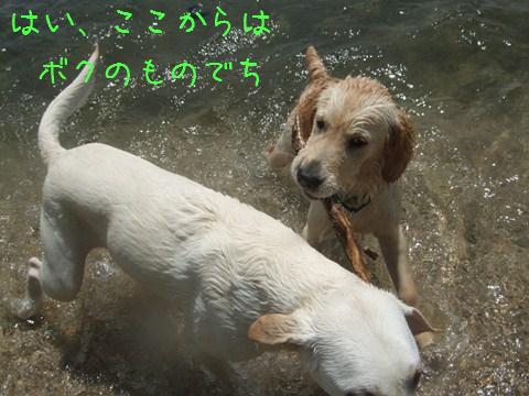 DSCF4011_20110509210019.jpg