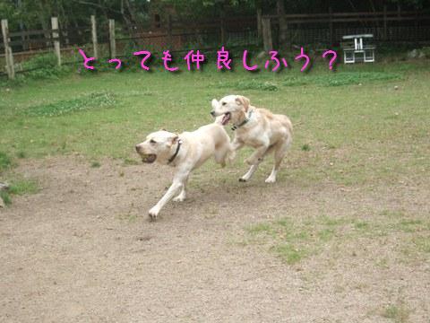 DSCF4012_20110613134048.jpg