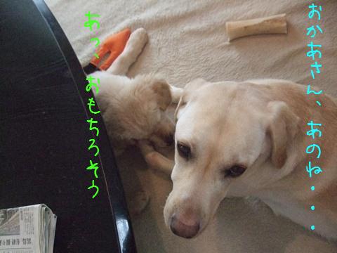 DSCF4016_20110304212444.jpg