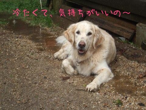 DSCF4027_20110322155200.jpg