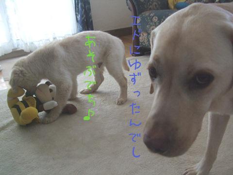 DSCF4028_20110226210050.jpg