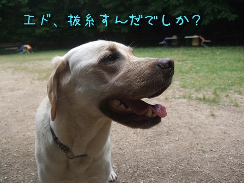 DSCF4029_20110613133721.jpg