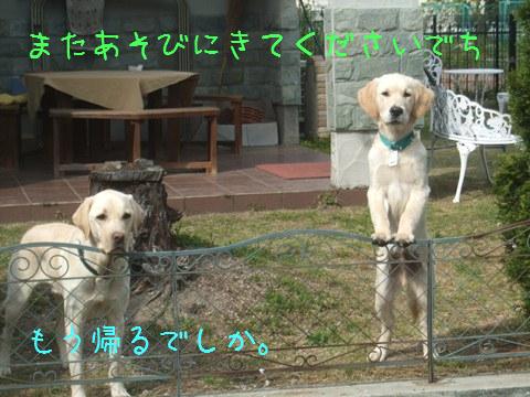 DSCF4035_20110509211820.jpg