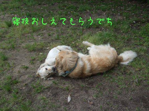 DSCF4042_20110516213531.jpg