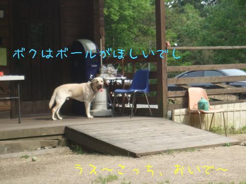DSCF4067_20110518202645.jpg