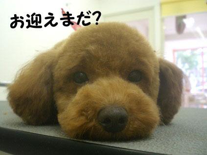 CIMG0076_20110101171340.jpg