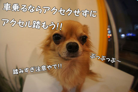 DSC06388.jpg