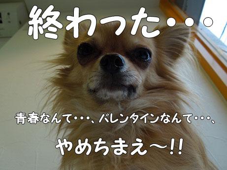 DSCN0409.jpg