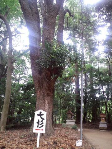 110625鹿島神宮 (23)