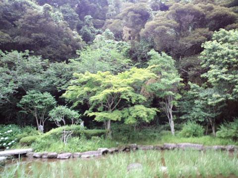 110625鹿島神宮 (22)