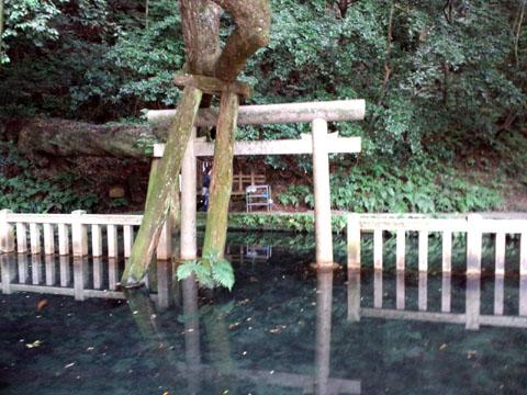 110625鹿島神宮 (7)