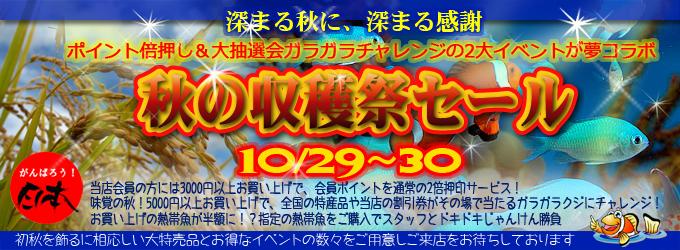 banner_2011shukakusai.jpg