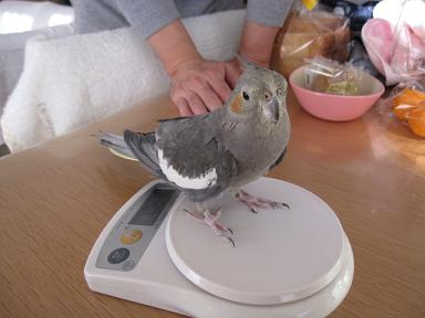 体重測定中なの♪