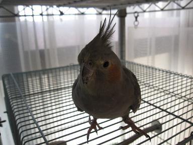 鳥シルエットなウメちゃん♪