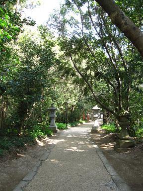 照葉樹の多い木々に囲まれた参道。