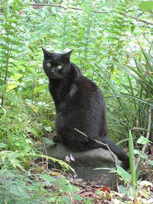 黒猫ちゃんが居ました♪