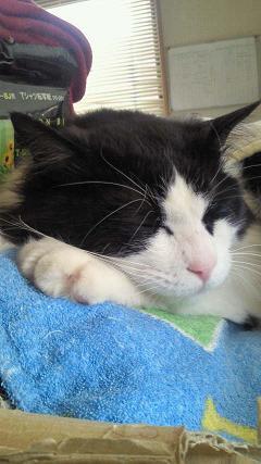 猫ベッドで熟睡中(笑)