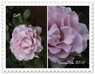 roze ryou