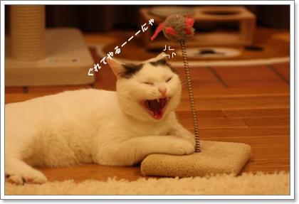 2010_05_19_0925ぐれるネコ