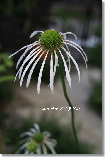 2010_06_21_1817.jpg