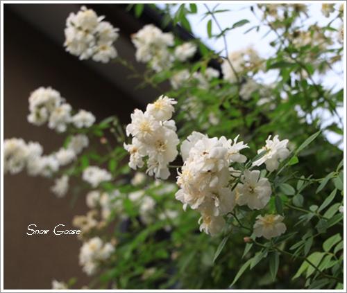 2010_09_06_2478.jpg