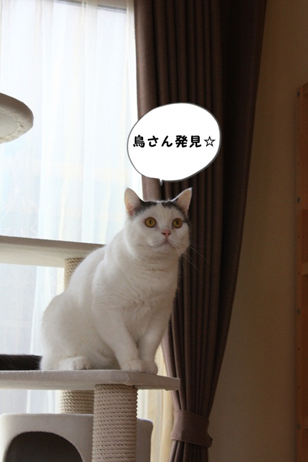 IMG_2008とり