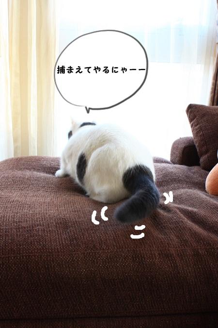 IMG_2012とり2