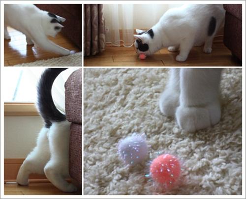 catsf.jpg